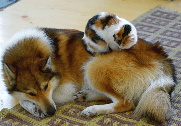"""20Animal Twins From Different Species That Made UsGo""""Aww"""""""