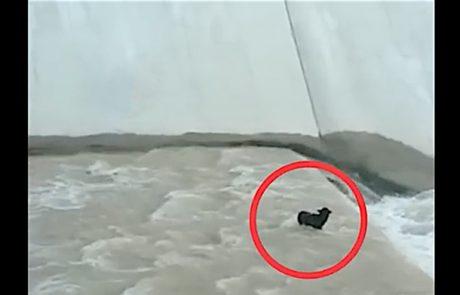 הכלב המבוהל היה תקוע באמצע התעלה – מספר אנשים שהבחינו בו החליטו לעשות את הבלתי ייאמן
