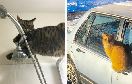 מצחיק – 21 חתולים שיש להם היגיון משלהם