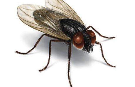 למה כמעט בלתי אפשרי להרוג זבוב?