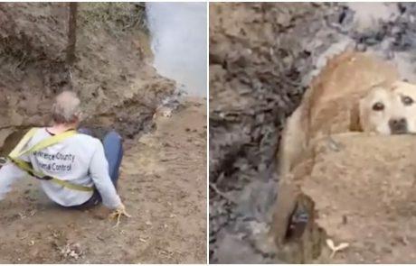 צפו בחילוצה המרגש של הכלבה שהייתה לכודה בנהר חמישה ימים!