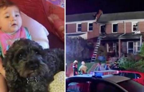 כלב המשפחה הותיק הקריב את חייו על מנת להציל את התינוקת משריפה!