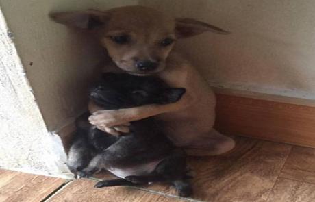 16 תמונות מתוקות אשר מוכיחות כי בעלי חיים יכולים להיות חברים טובים גם כן!