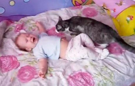 התינוק בכה ולא תאמינו מה הייתה תגובת החתול המשפחתי!