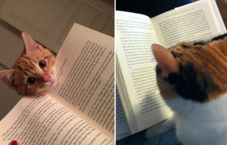 9 חתולים מצחיקים שמנסים למנוע מבעליהם לקרוא ספרים!