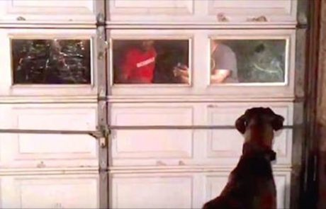 הכלב מתאחד עם בעליו לאחר שנתיים ארוכות ועצובות מאוד!