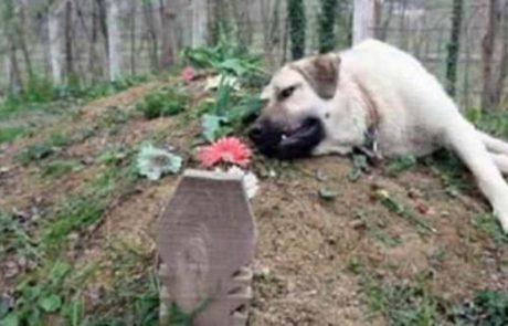 הכלב הזה מתגנב כל יום לבית הקברות והסיבה לכך תשאיר אתכם שבורי לב