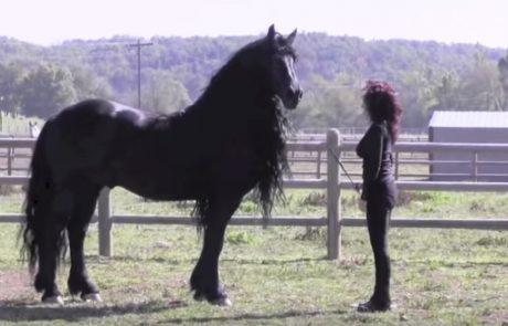 מספיק מבט אחד בשביל להבין למה זהו הסוס היפה בעולם!