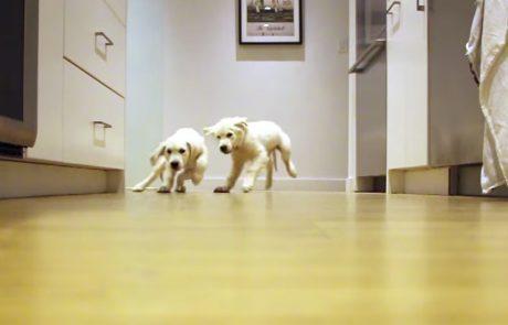 תיעד את גורי הכלבים שלו במשך תשעה חודשים והתוצאות גרמו לסרטון הויראלי המתוק הזה