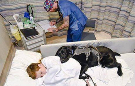 הכלב המדהים הזה עוזר לחברו הילד בבית החולים
