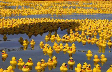 בשנת 1992 טבעו מכולות עמוסות סחורה בלב הים עם 28,000 ברווזוני גומי