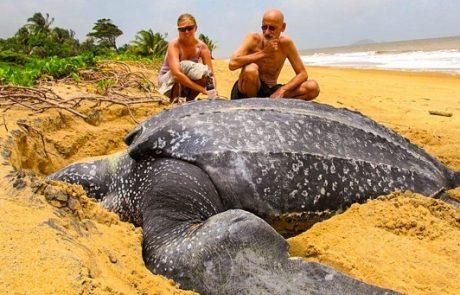 20 בעלי חיים מדהימים שגודלם הוא מעבר להבנתנו