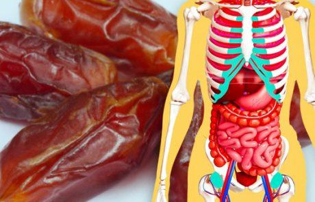 מה יקרה לגופך אם תתחיל לאכול 3 תמרים בכל יום במשך שבוע