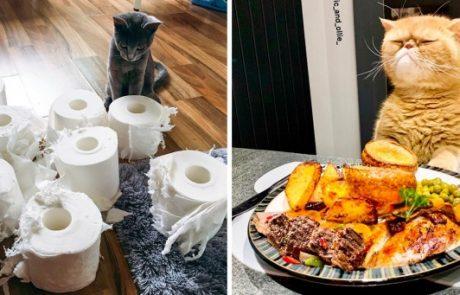 20+ תמונות דרמטיות שמוכיחות כי חתולים לא יתנו לך להשתעמם אף פעם