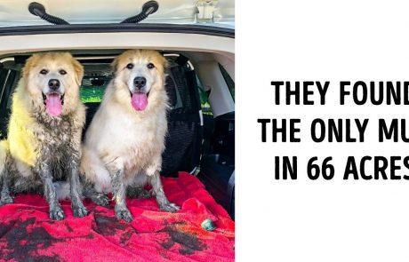25 גורים שמגיע להם להיבחר לגורים המצטיינים של השנה
