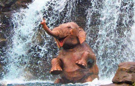 21 תמונות של חיות מתוקות שישפרו לכם מיידית את מצב הרוח