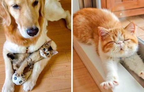 25 תמונות שמוכיחות כי חתולים הם הדבר הכי חמוד בכדור הארץ