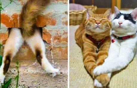 17 בעלי חיים שחיים את חייהם בדרך משעשעת ויוצאת דופן