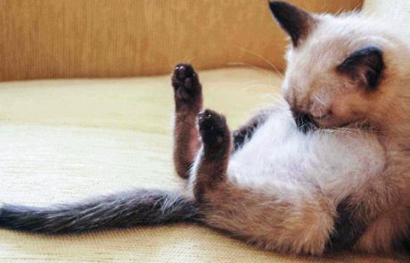 אם אי פעם תרגיש עצוב, 31 החתולים הישנונים האלה יגרמו לך לחייך