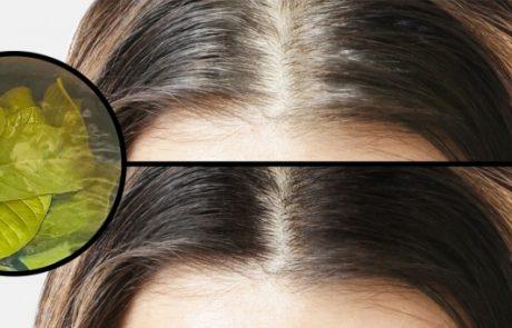 11 טיפים פשוטים לטיפוח השיער שישנו את מראה שיערך במינימום מאמץ!