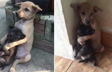 גורי הכלבים הקטנטנים האלה נשארו מחובקים גם לאחר שמצאו בית חם!