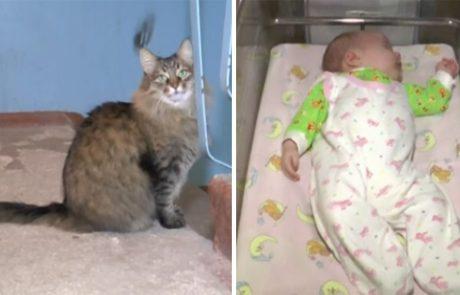התינוק ננטש במדרגות והחתולה הגנה עליו עד שהגיעה העזרה!